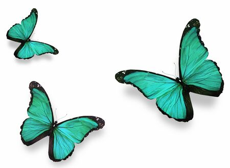 Three green butterflies morpho, isolated on white background photo