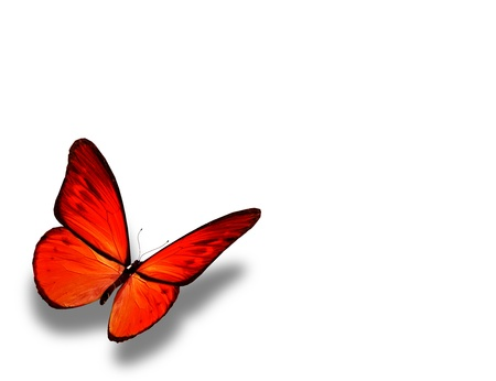 Orange butterfly, isolated on white background photo