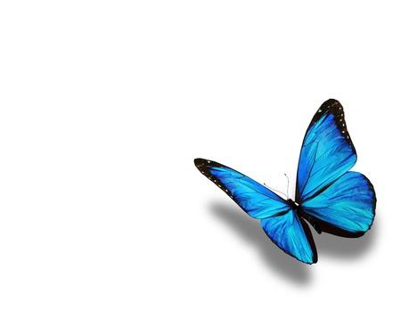 Blauwe vlinder, geïsoleerd op wit