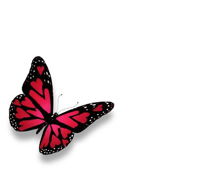Pink butterfly with hearts on wings, isolated on white photo