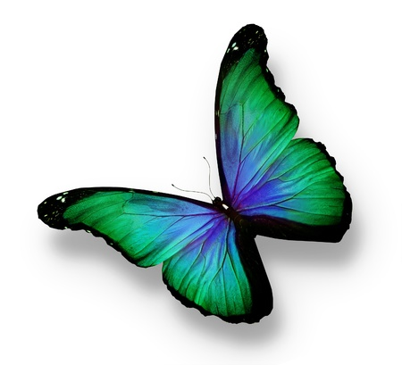 mariposa azul: Verde, azul mariposa, aislado en blanco