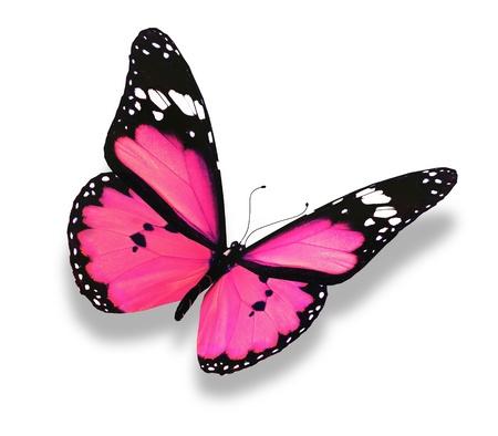 butterflies flying: Rosa farfalla, isolato su bianco