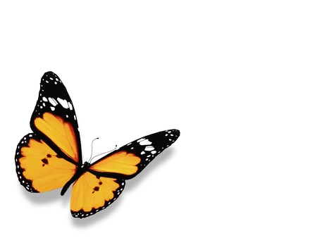Yellow butterfly, isolated on white background photo