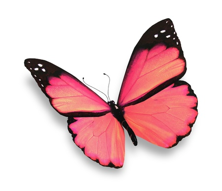pink heart: Pink butterfly, isolated on white