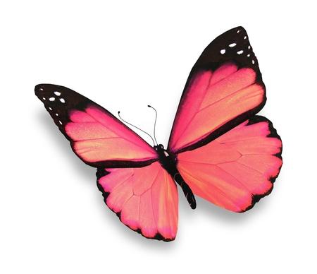 mariposas volando: Rosa mariposa, aislado en blanco