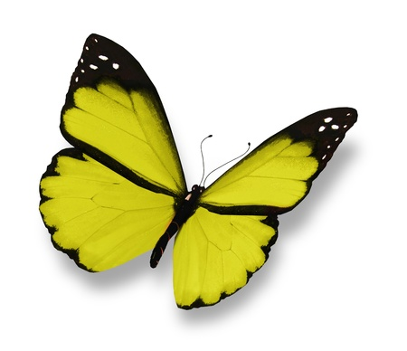 amarillo y negro: Mariposa amarilla, aislado en blanco
