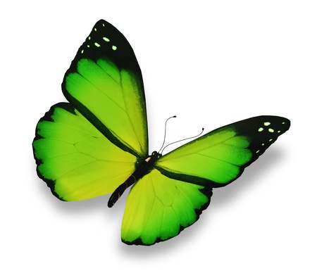 butterfly flying: Green butterfly, isolated on white