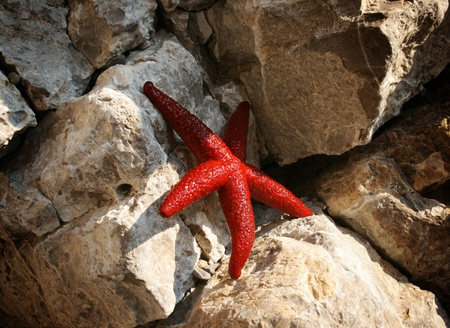 live coral: Sea star and stones Stock Photo