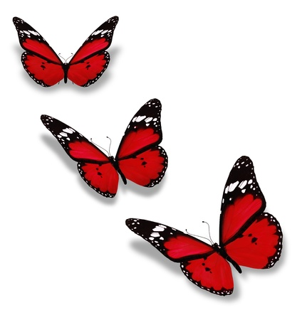 red animal: Three red butterflies isolated on white