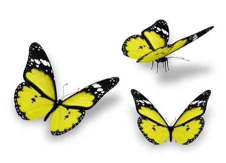 mariposas volando: Tres mariposas amarillas, aisladas en blanco Foto de archivo