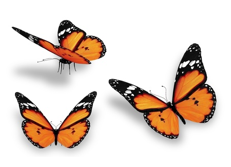 white butterfly: Three orange butterflies, isolated on white Stock Photo