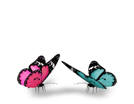 free background: Pink and blue butterfly, isolated on white background