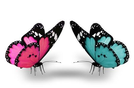 Roze en blauwe vlinder, geïsoleerd op wit