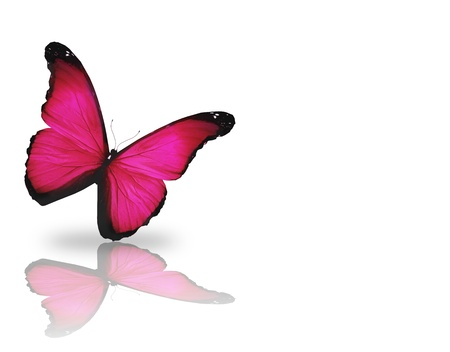 Bright pink butterfly, isolated on white background