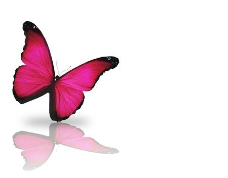 papillon rose: Lumineux papillon rose, isolé sur fond blanc
