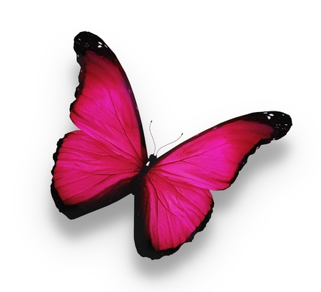 pink heart: Bright pink butterfly, isolated on white Stock Photo
