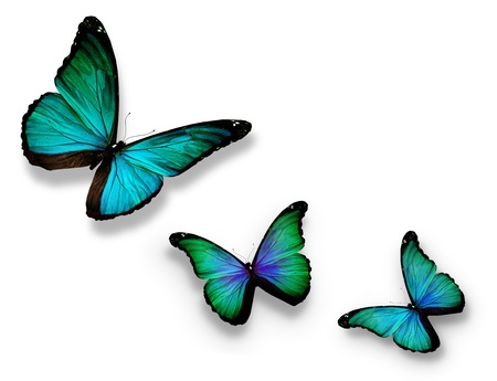 Three turquoise butterflies, isolated on white photo