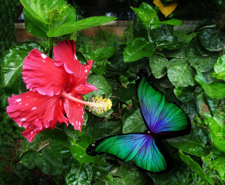 Green butterfly and pink flower photo