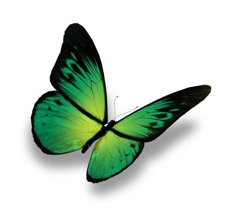 mariposas volando: Verde mariposa, aislado en blanco Foto de archivo