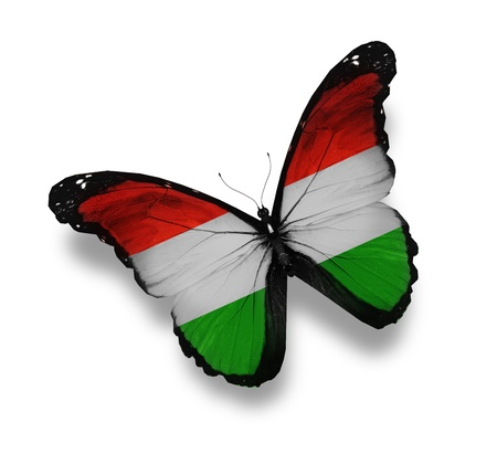 Hungarian flag butterfly, isolated on white photo