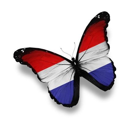 mariposas volando: Mariposa bandera flamenca, aislado en blanco