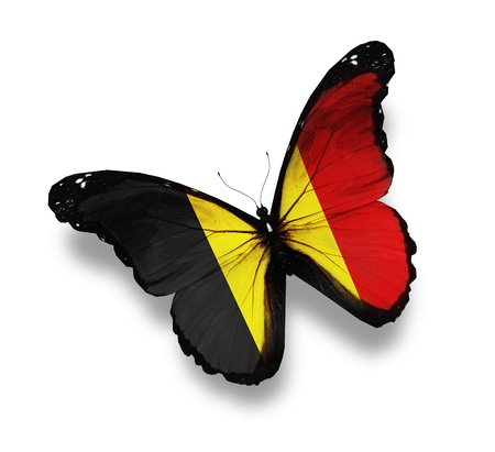 Belgian flag butterfly, isolated on white photo