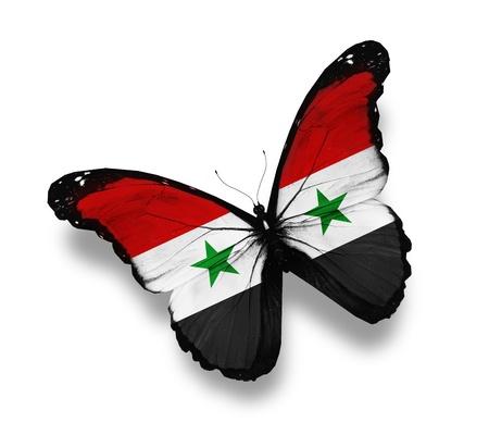 Syryjski: Syryjczyk motyl flagi, na białym tle Zdjęcie Seryjne