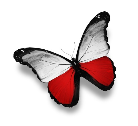 poland flag: Polish flag butterfly, isolated on white