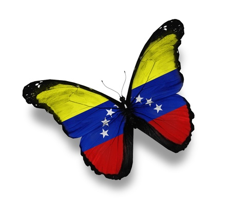 Venezuelan flag butterfly, isolated on white photo