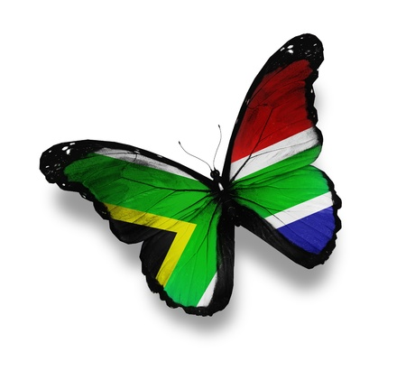 south african: South African flag butterfly, isolated on white