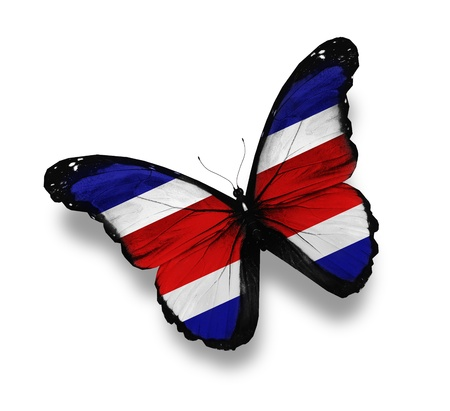 black and blue butterfly flying: Costa Rica flag butterfly, isolated on white