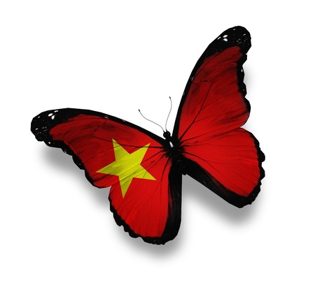 Vietnamese flag butterfly, isolated on white photo
