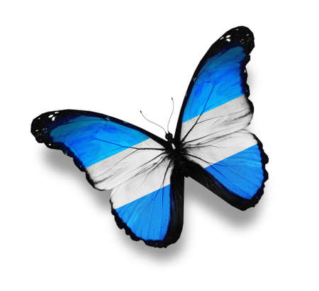 Argentine flag butterfly, isolated on white photo