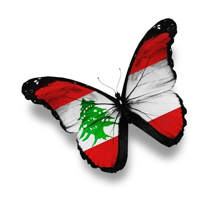 Lebanese flag butterfly, isolated on white photo
