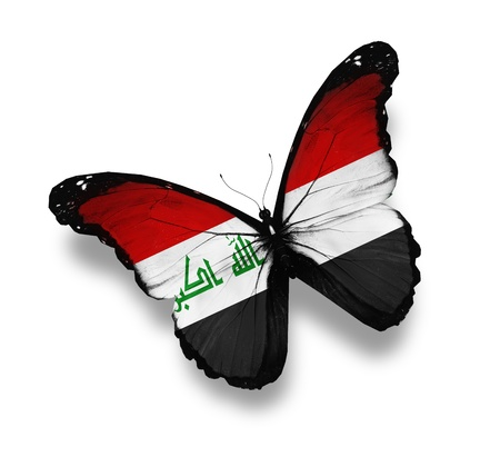 iraqi: Iraqi flag butterfly, isolated on white
