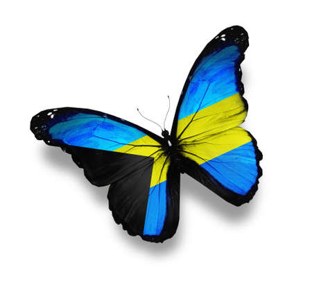 Bahamian flag butterfly, isolated on white Stock Photo
