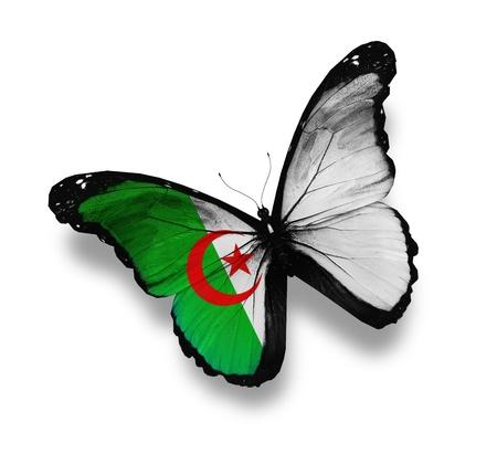 Algierski: Algierczyk flaga motyl, na białym tle