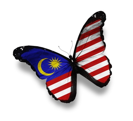 Malaysian flag butterfly, isolated on white photo
