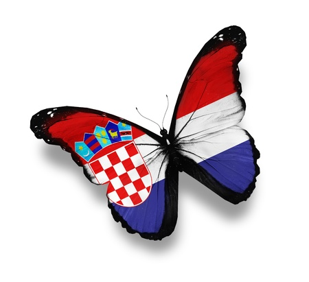 Croatian flag butterfly, isolated on white