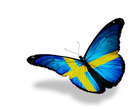 Swedish flag butterfly flying, isolated on white background