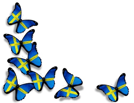 the swedish flag: Swedish flag butterflies, isolated on white background