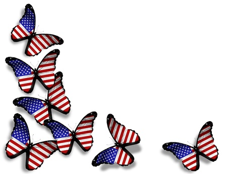 black and blue butterfly flying: American flag butterflies, isolated on white background