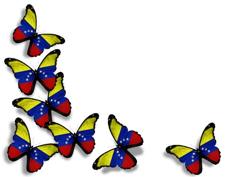 bandera de venezuela: Mariposas de bandera venezolana, aislados en fondo blanco Foto de archivo