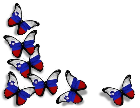 slovenian: Slovenian flag butterflies, isolated on white background