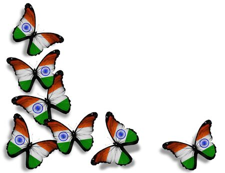 Indian flag butterflies, isolated on white background photo