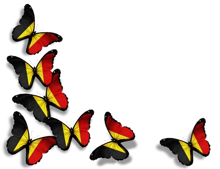 Belgian flag butterflies, isolated on white background