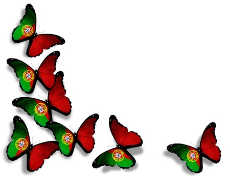 Portuguese flag butterflies, isolated on white background photo