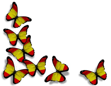 Spanish flag butterflies, isolated on white background