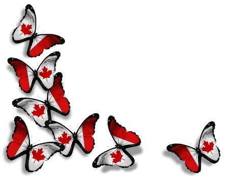 canadian flag: Canadian flag butterflies, isolated on white background