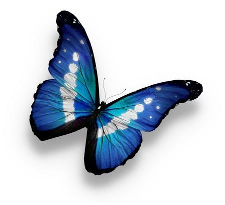 helena: Morpho rhetenor helena butterfly , isolated on white